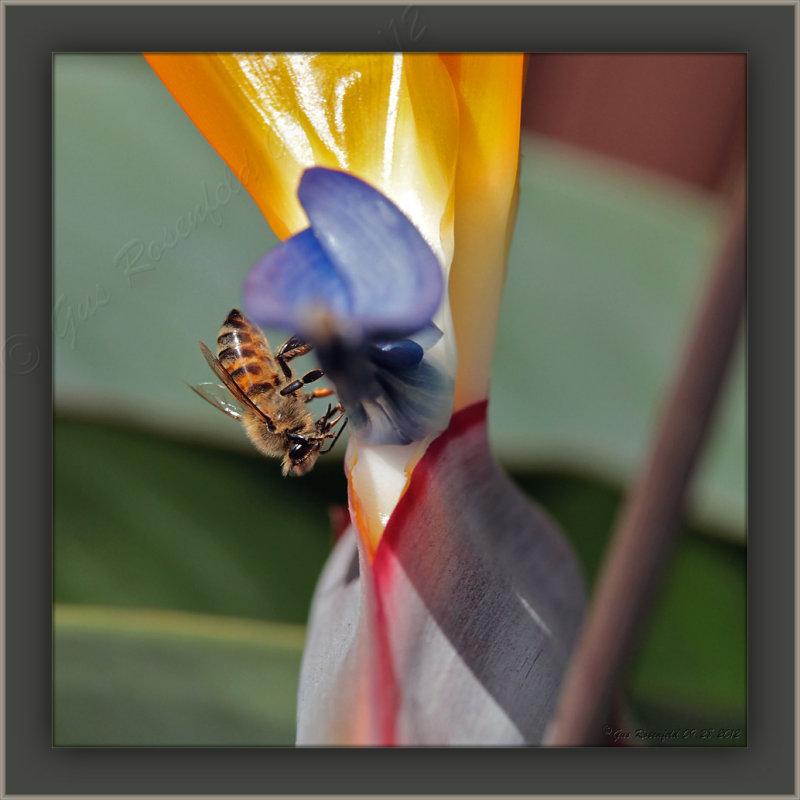 Of Birds & Bees - Paradise & Honey