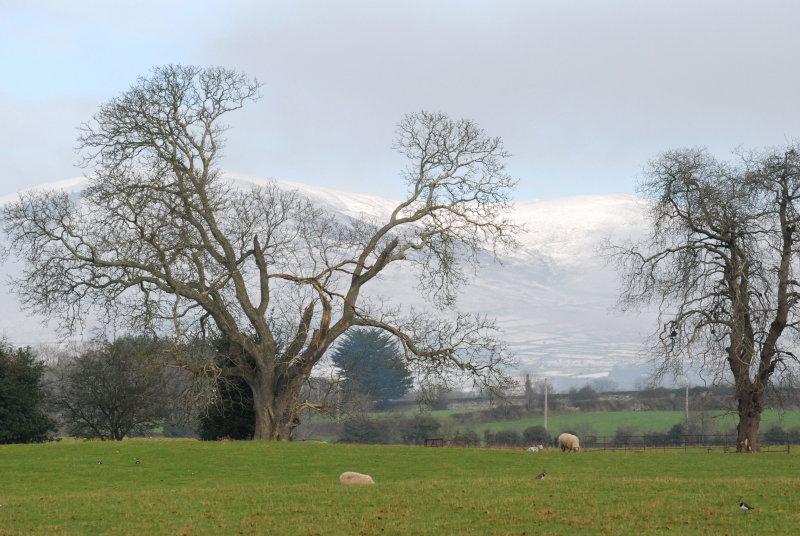 Winter grazers