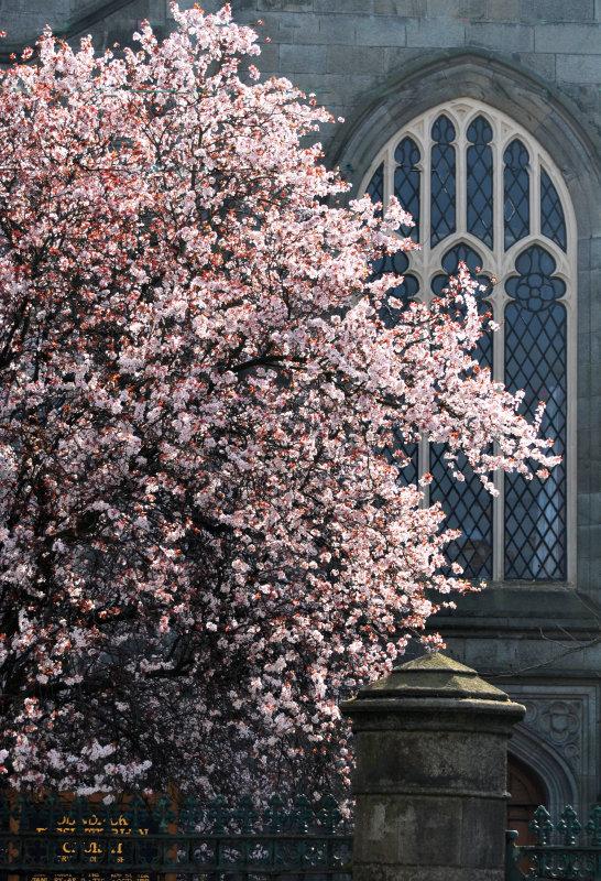 Sunlit blossoms