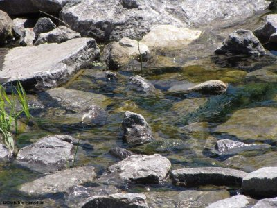 Amphibian pond spillway