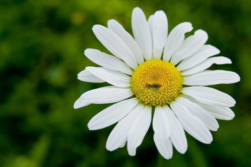 The Smiling Flower