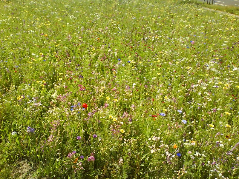 Flower lawn 2