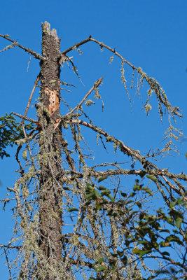 2T1U5999.jpg - Algonquin Provincial Park, ON, Canada