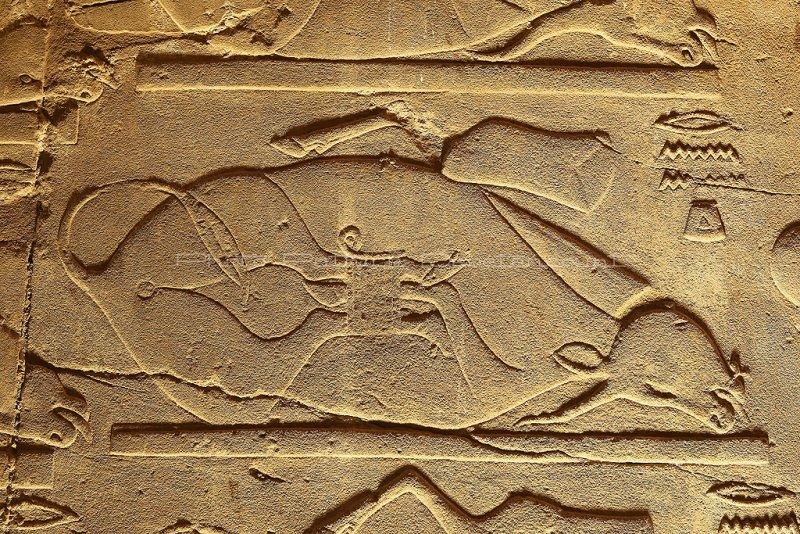 3399 Vacances en Egypte - MK3_2327_DxO WEB2.jpg