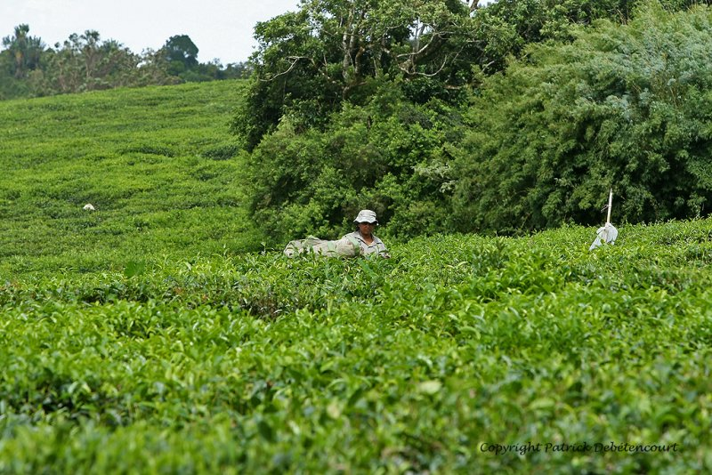 2 weeks on Mauritius island in march 2010 - 1791MK3_0987_DxO WEB.jpg