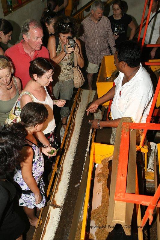 2 weeks on Mauritius island in march 2010 - 1875MK3_1075_DxO WEB.jpg