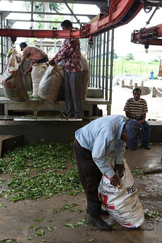 2 weeks on Mauritius island in march 2010 - 1920MK3_1126_DxO WEB.jpg