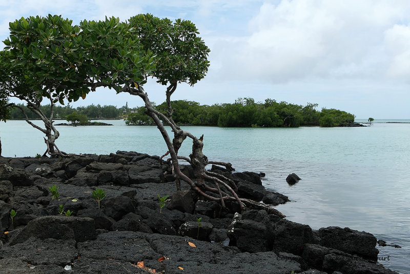 2 weeks on Mauritius island in march 2010 - 2015MK3_1227_DxO WEB.jpg
