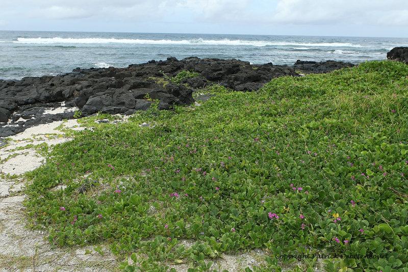 2 weeks on Mauritius island in march 2010 - 2084MK3_1300_DxO WEB.jpg