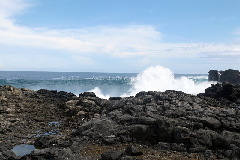 2 weeks on Mauritius island in march 2010 - 2895MK3_1908_DxO WEB.jpg