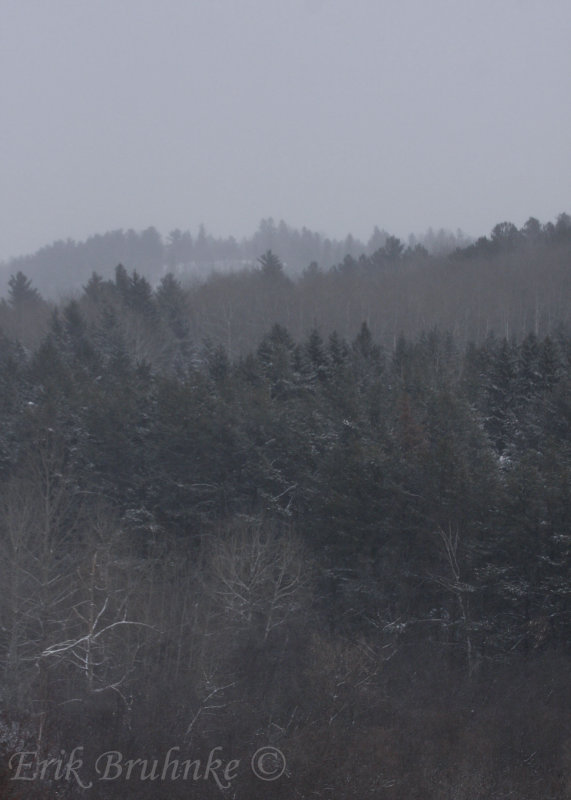View from the peak of Hartley Nature Center