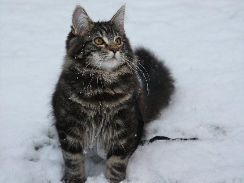 i like snow !
