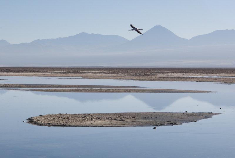 W-2009-08-19 -0390- Atacama - Alain Trinckvel.jpg