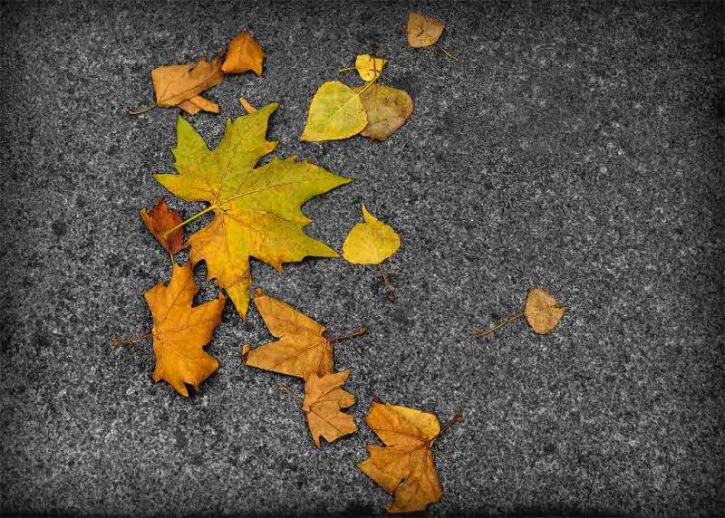 Paris Autumn Leaves.jpg