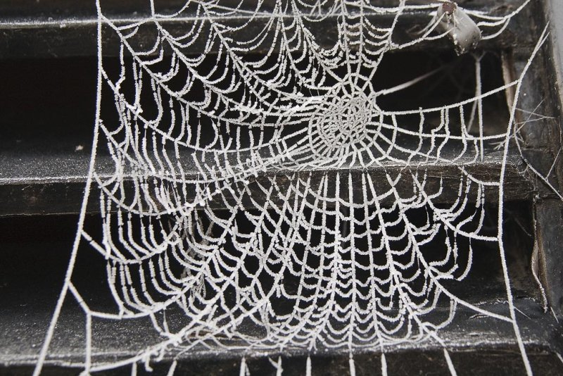 Frosted Web