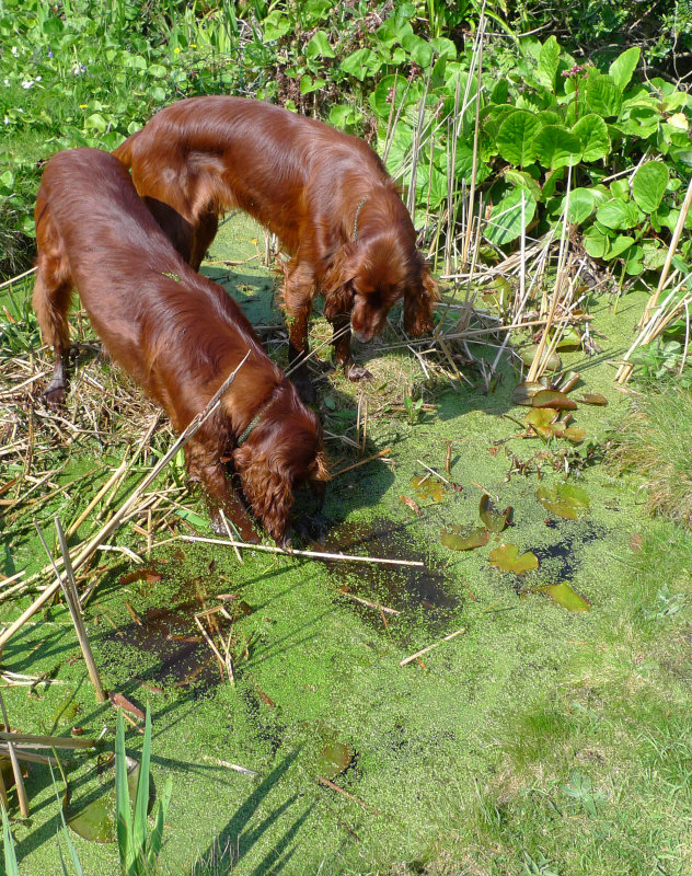 Thomas (left) & Rudhi in the Pond