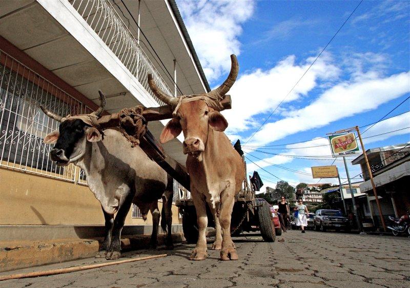 Oxen cart in San Juan del Sur, Nicaragua