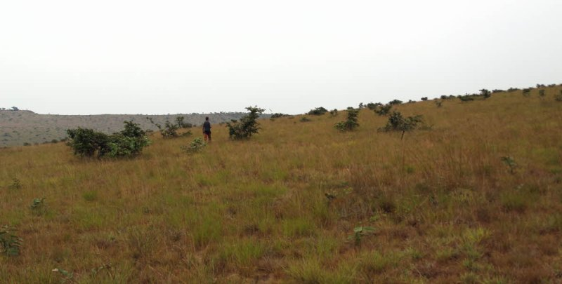 Birding the wide open spaces of the grassland hills, Leconi, Gabon