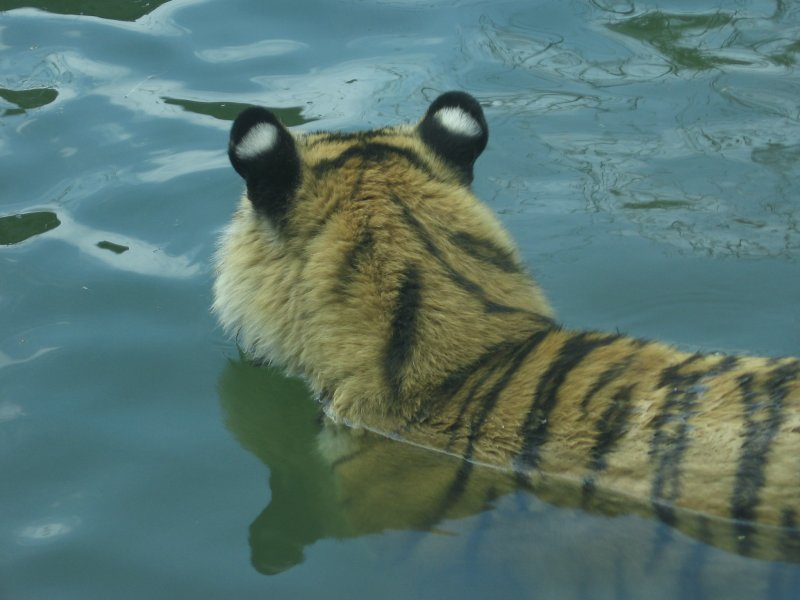 Philadelphia Zoo #6204