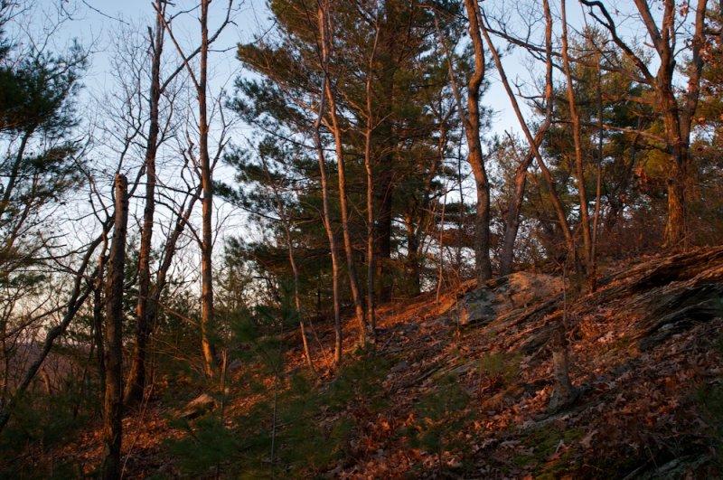 Evening hillside