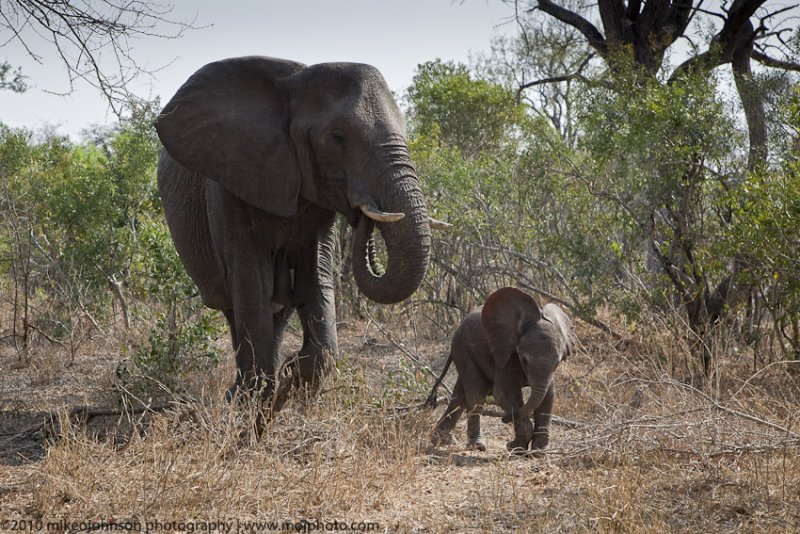 029-Elephant with Baby