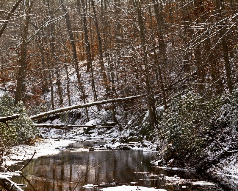 Another Winter Woods Shot