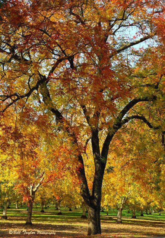 Autumn Leaves !