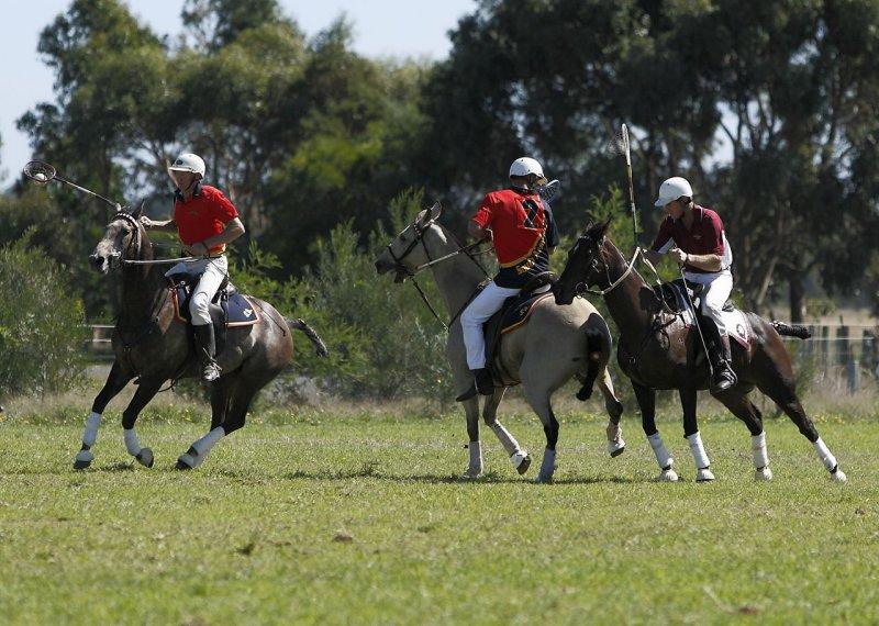 Australian Polocross 101.jpg
