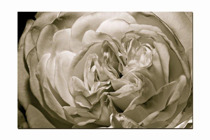 Macro flower 005 copy.jpg