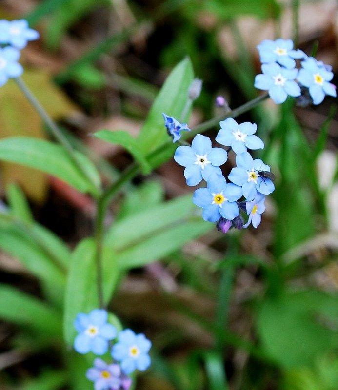 Blue Wildflowers