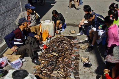 The selling of dried snakes and frogs for medicine in southwest China.