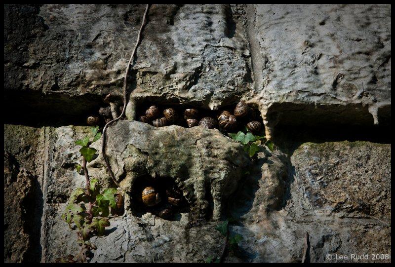 Snail Commune