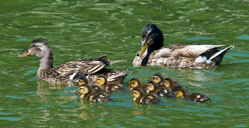 Family Outing _MG_5903.jpg