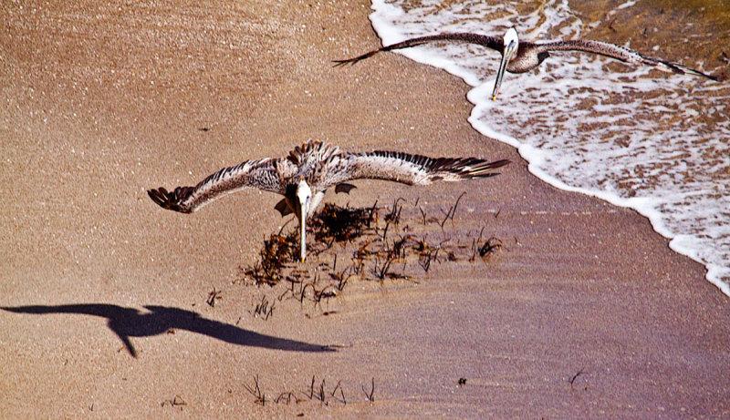 Landing on a beach  _MG_1037.jpg