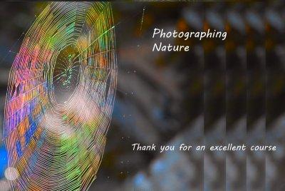 Spiderweb1.jpg