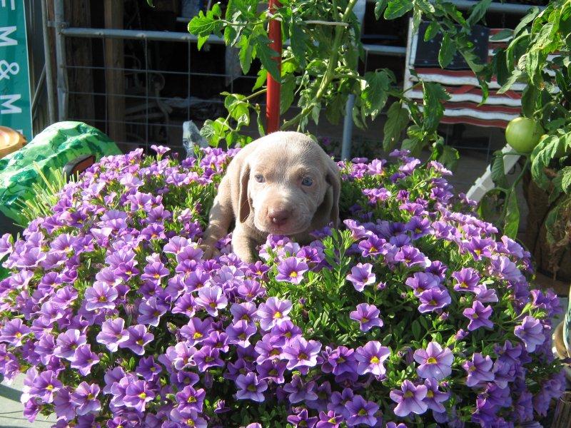 Sadies flower girl