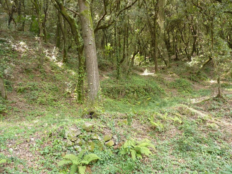 Mountain forest in Montseny