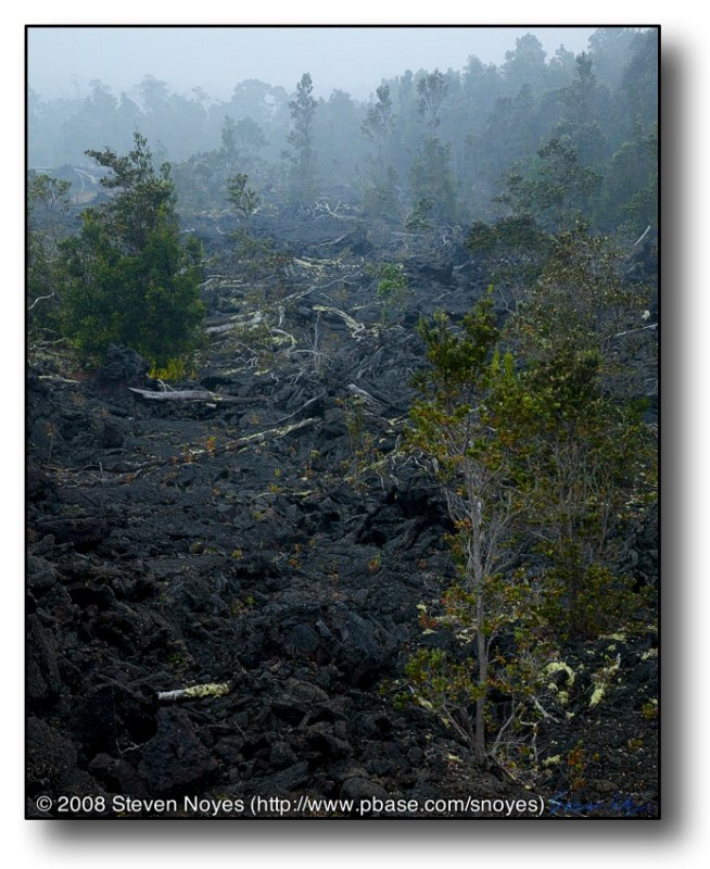 Devastation : Kilauea : Hawaii