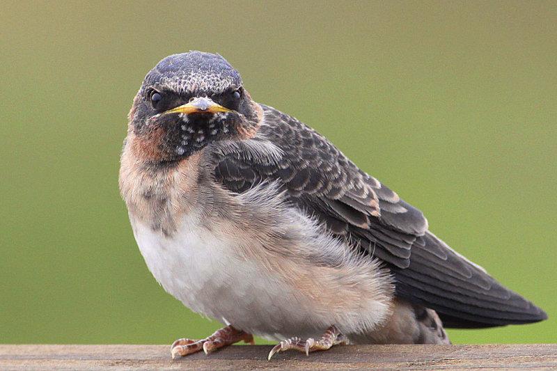 IMG_1616 birds.jpg