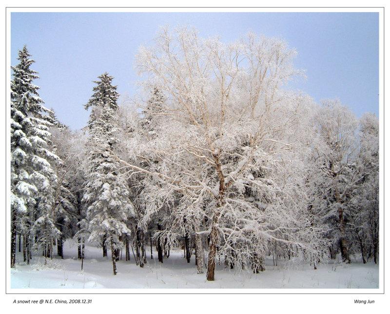 Snow tree  雪树