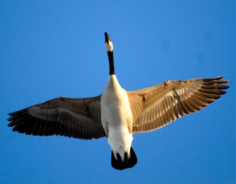 Directly Overhead