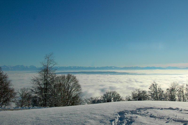 Fog Over the Plain