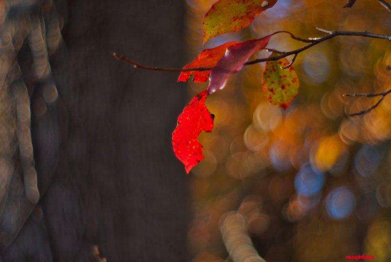 A Leaf Remains
