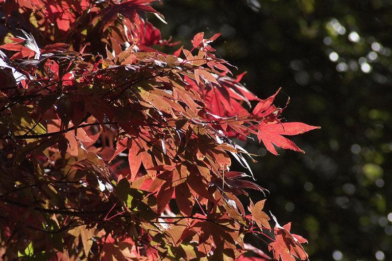 Autumn 09