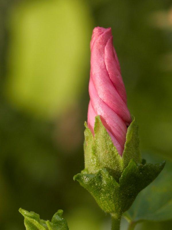2010-08-19 Flower