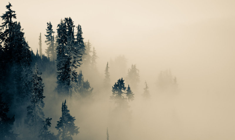Old Growth Forest Diving Into Cloud <br>(LavaDivide_092112-549-7.jpg)*