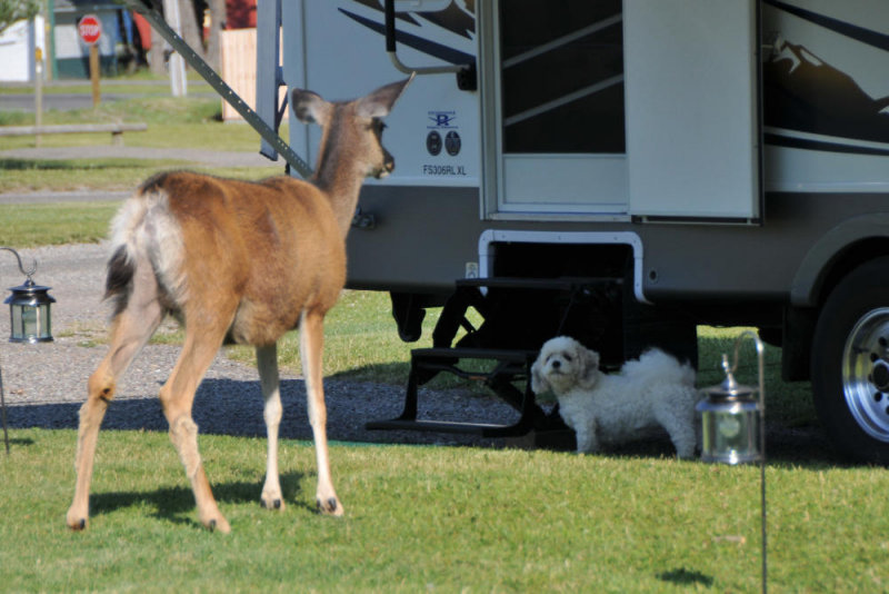 Confrontation in the campground!