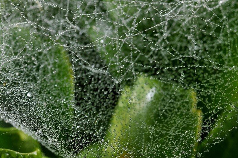 Many tiny dew drops