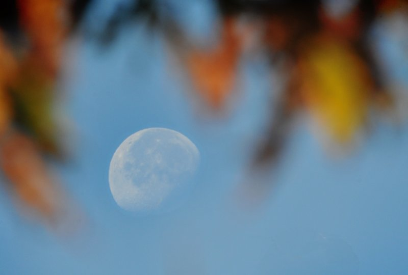 Fall Leaves and Moon