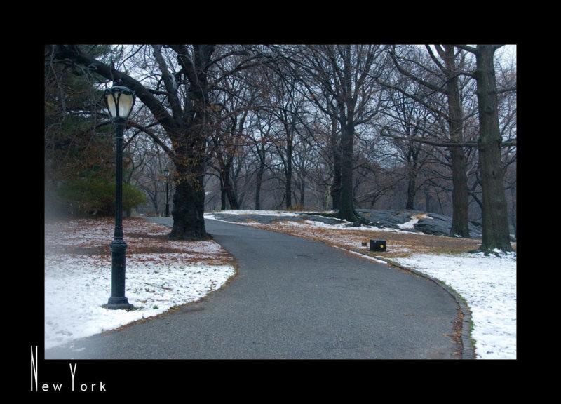 Morning Walk in Central Park_D2B3965.jpg